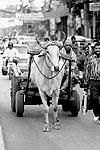 delhi-bullock-cart-v-T